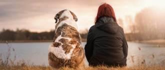 dog better life