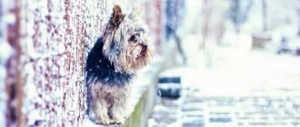 minidog winter