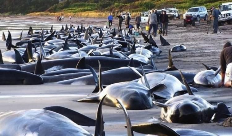 whale on coast
