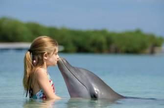 dolphin like a human