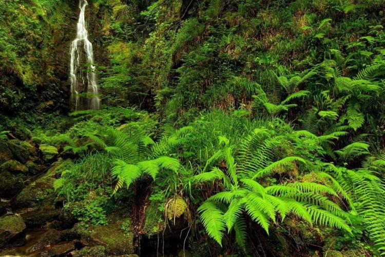 newzealand forest