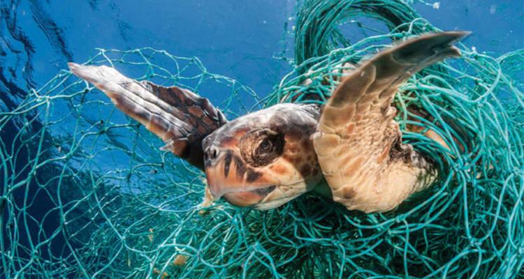 plastic in ocean