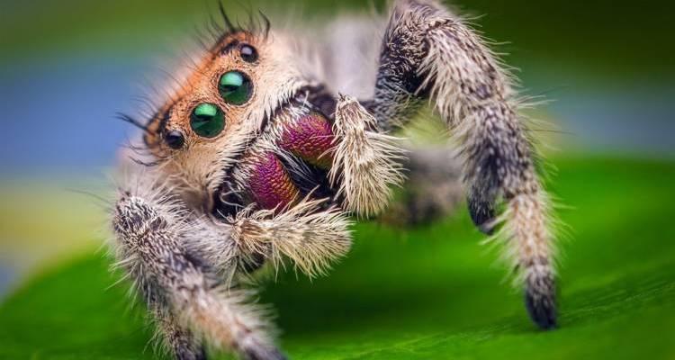 good spider