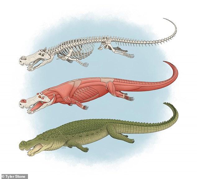 crocodile 80 million years ago