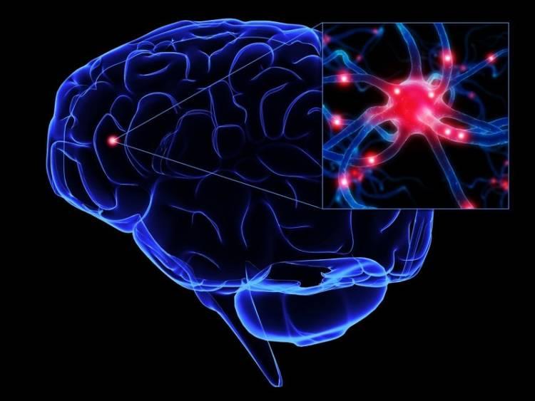 neyrony v mozge