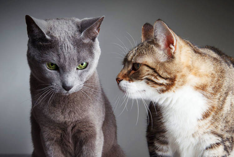 Beloved cat