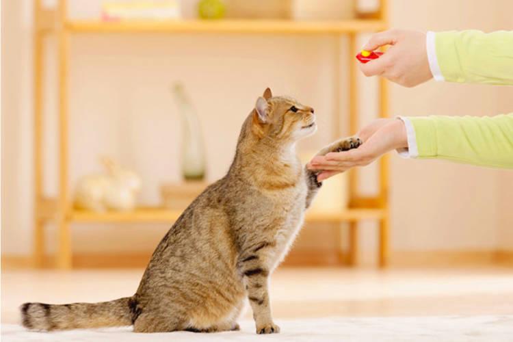 Cat teaching