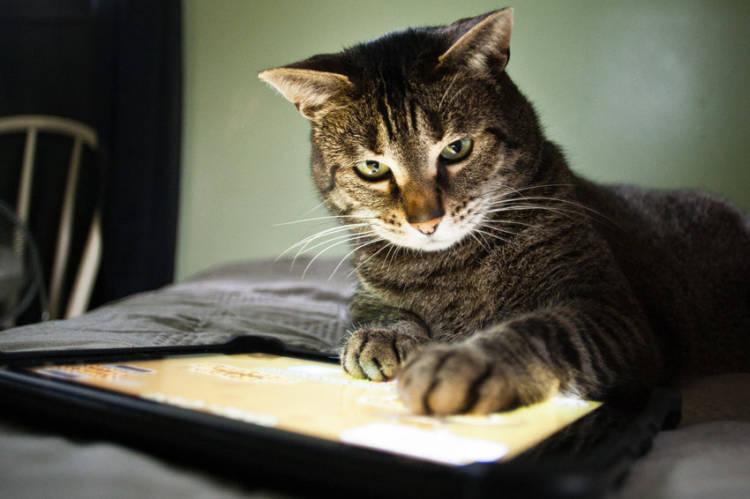 Cats language